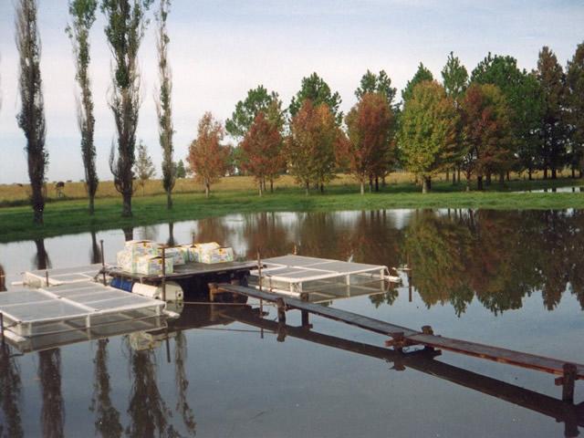 Aquamind luis compagnucci acuicultura for Reproduccion de peces ornamentales