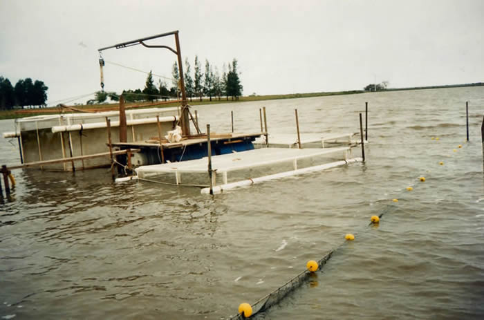 Aquamind luis compagnucci acuicultura for Jaulas flotantes para piscicultura